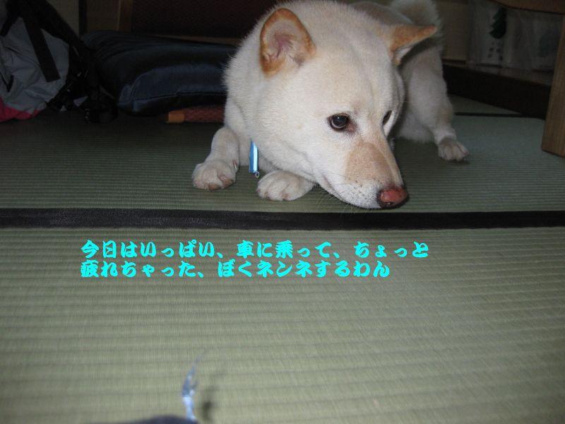 旅犬2010-14~1