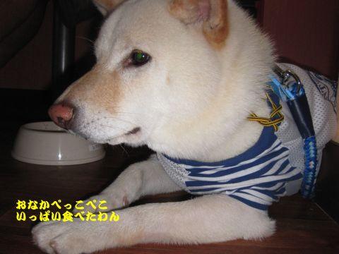 旅犬2010-20~2