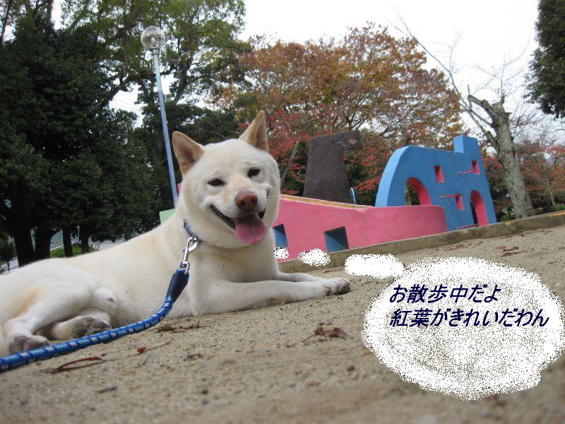kaitokyotannai2.jpg