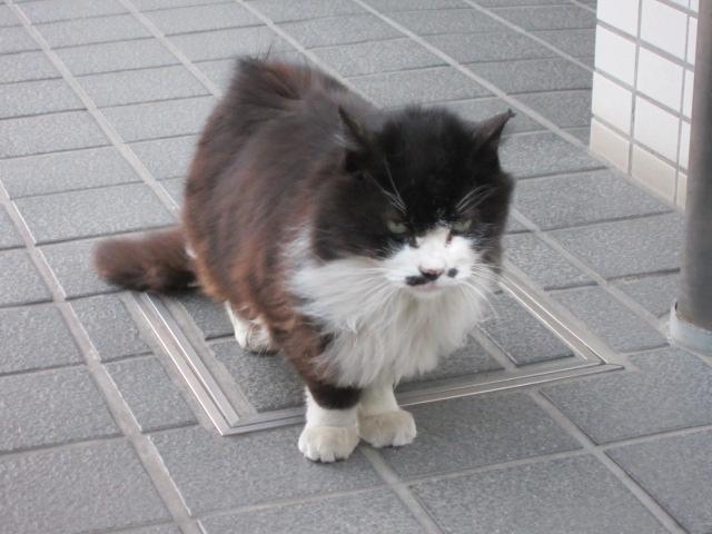 近所のネコ がんみーず