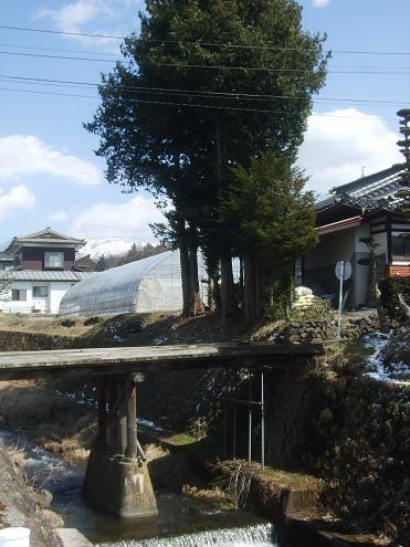 咲&タコス