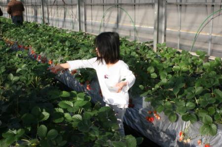 20100102itigo3.jpg