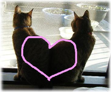 airipuramu-heart.jpg