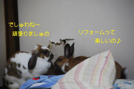 DSC_0215.jpg