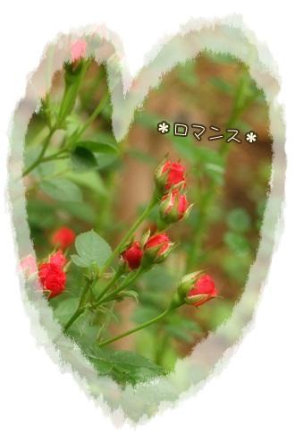 IMG_7138_20100627224303.jpg