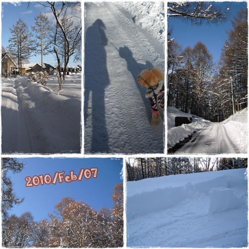 cats1_20100207233858.jpg
