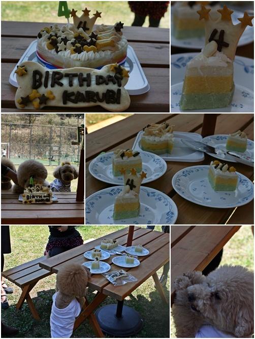 cats2_20100505225615.jpg