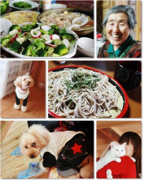 cats2_20101129000529.jpg