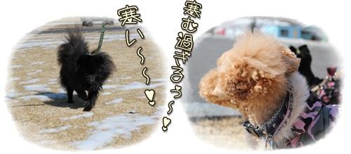 cats3_20110309174602.jpg