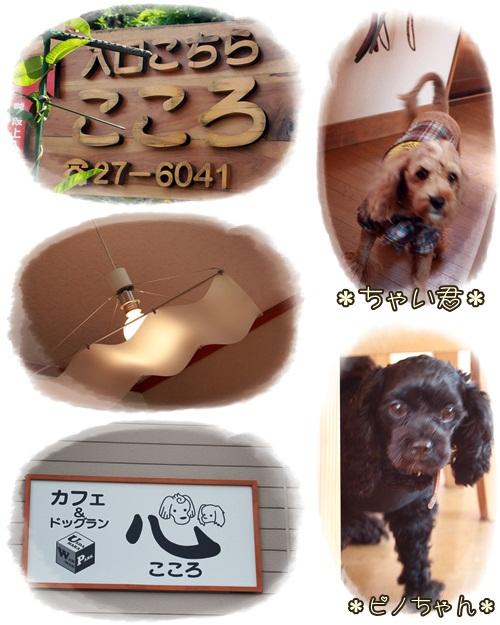 cats4_20100918220048.jpg
