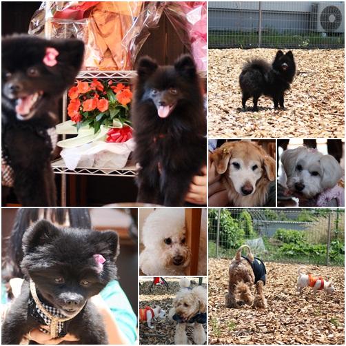cats5_20100617175641.jpg