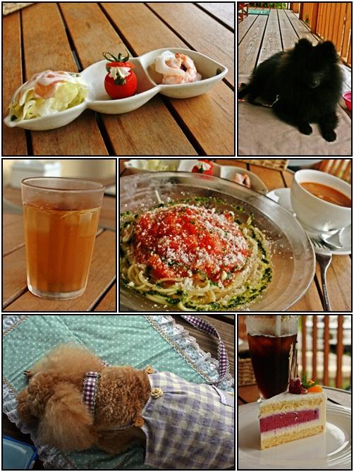 cats5_20100715162011.jpg