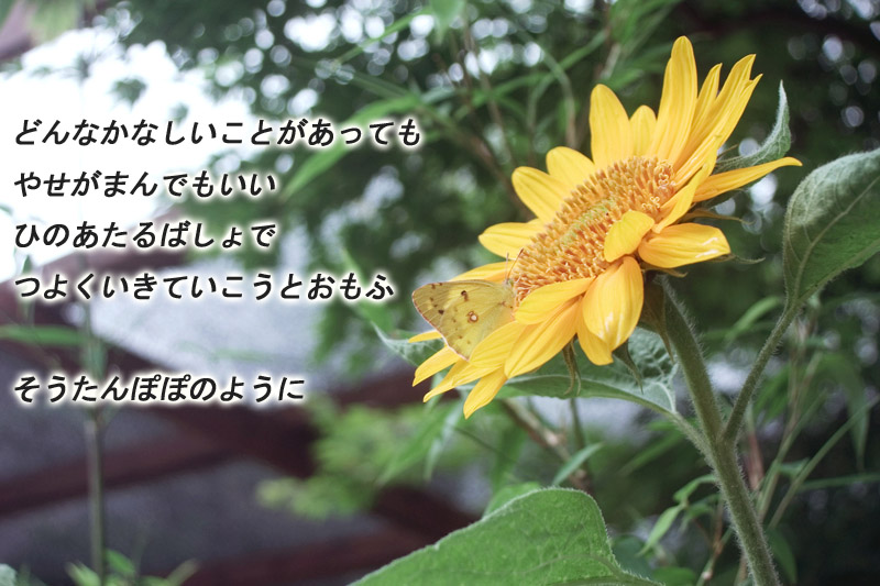 s-CRW_0996B2.jpg
