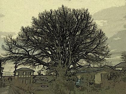 20120403.jpg