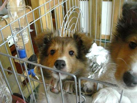 募集中の子犬