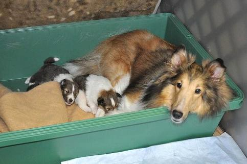 子犬とお嬢