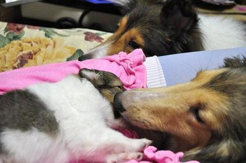 子犬とお嬢とジョージ