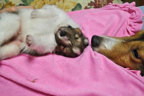 子犬とジョージ