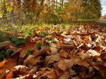 落ち葉の道端
