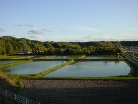 rice_field1