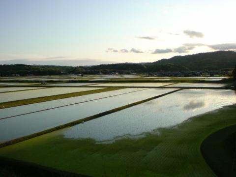 rice_field2