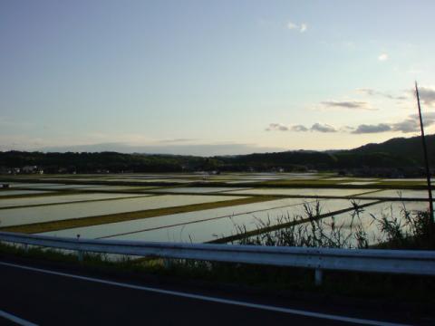 rice_field3