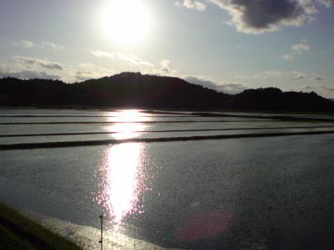 rice_field4