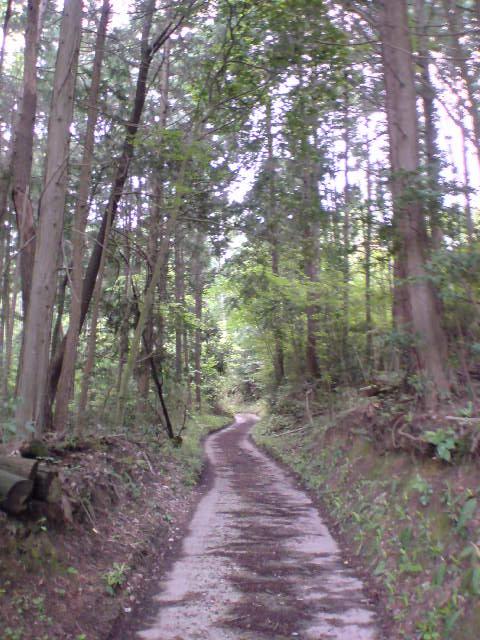 quiet_path1