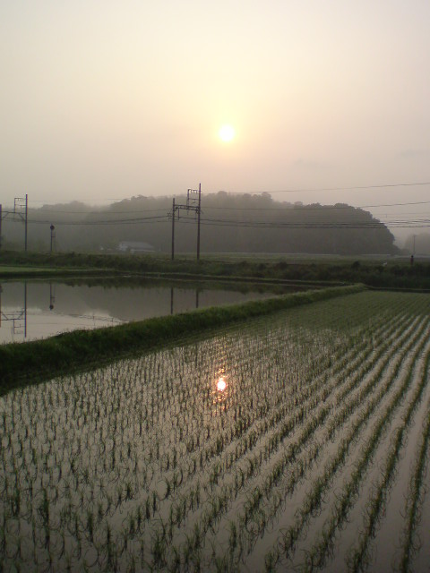 sun_in_the_rice_field