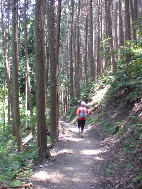 trail44