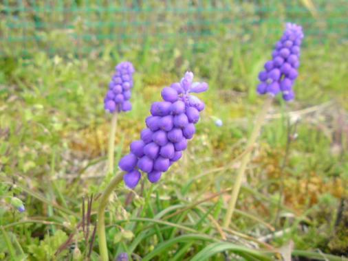 flower040210b