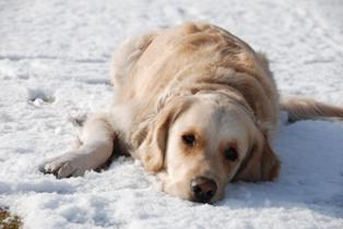 雪、気持ちええわあ。