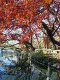 inogasira2_1438091_convert_20111215002230.jpg
