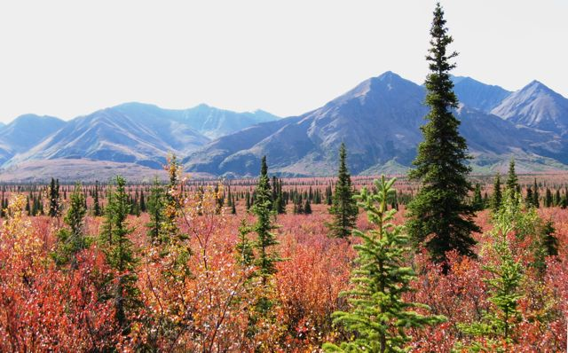 008 08 Alaska 324