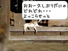 猫 下りる