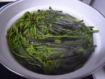 山菜採りSS8