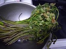 山菜採りSS5