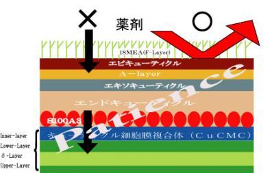 浸透経路(1)