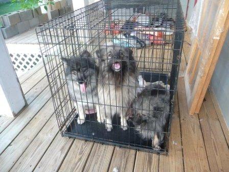 SC puppymill dog1