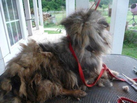 SC puppymill dog 5
