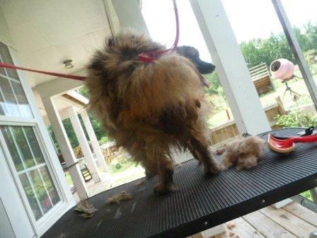 SC puppymill dog 4