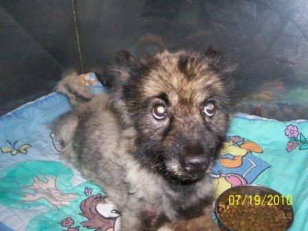 SC puppymill update 102
