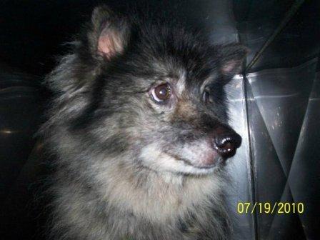 SC puppymill update 104