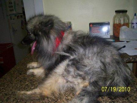 SC puppymill update 108