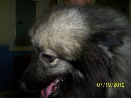 SC puppymill update 109