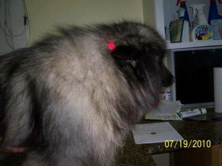 SC puppymill update 110