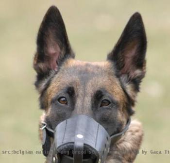 belgian-malinois-leather-dog-muzzle_LRG_197466_M.jpg
