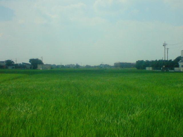 途中の田んぼ。