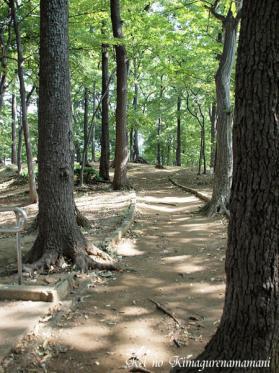 公園の中の林♪