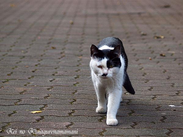 近寄って来るネコ♪